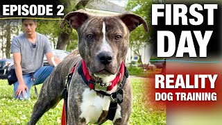 The FIRST FULL DAY with a TOTALLY UNTRAINED Pit Bull: [Reality Dog Training Ep. 2]