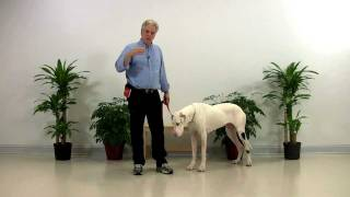 Dog Training - Deaf Great Dane - 001