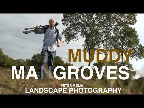 Muddy Mangroves, Landscape Photography Australia, bracketing exposures. Vlog_001