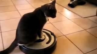 Кот и Робот Пылесос в своем Амплуа!