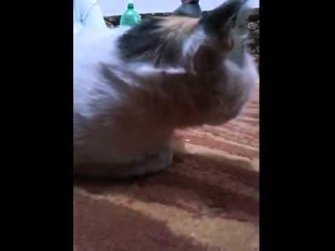 قط مسحور| اثر السحر على القط حسبي الله ونعم الوكيل