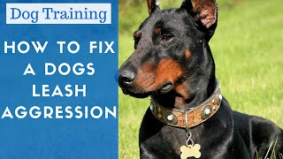 Dog Training - How To Cure Leash Aggression In Dogs And Make Dogs Less Aggressive