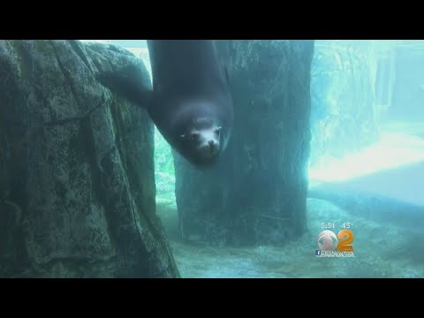 Check Out CBS2's Lunchtime Zen