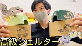 【高級シェルター】1個約5,000円する高級シェルター(ishelter)を買ってみた。
