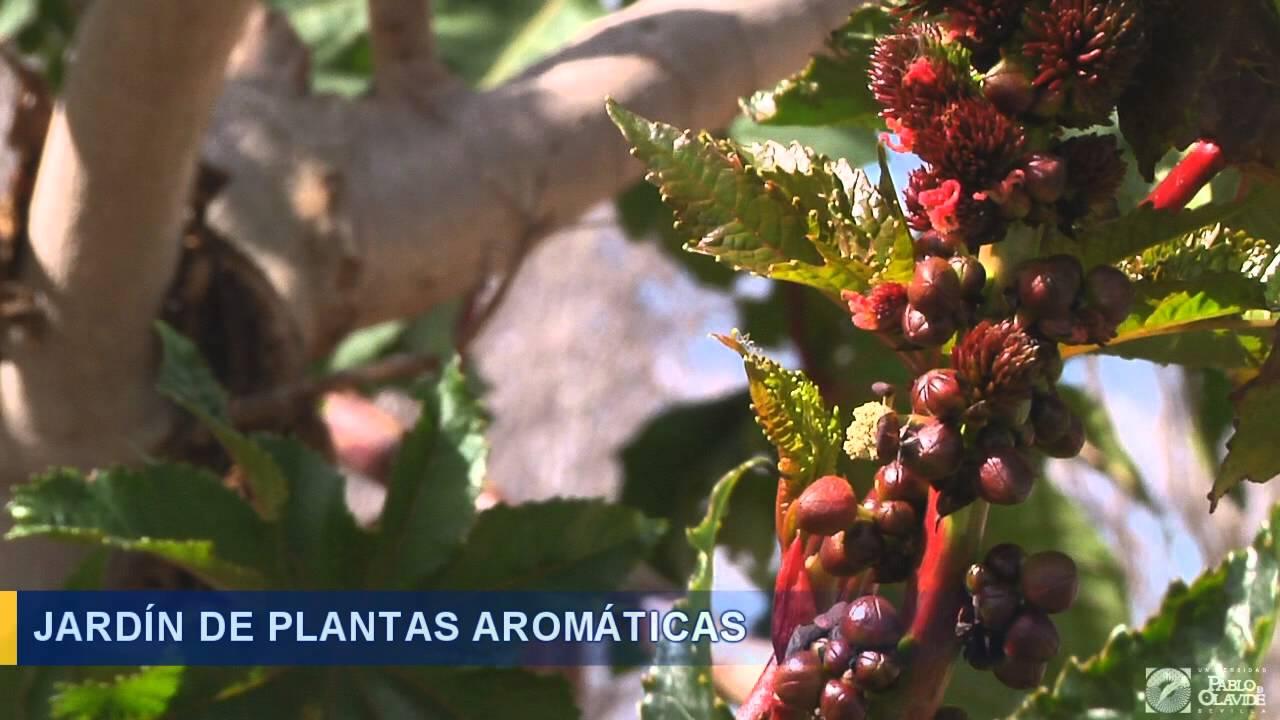 Jard n de plantas arom ticas youtube - Plantas aromaticas jardin ...