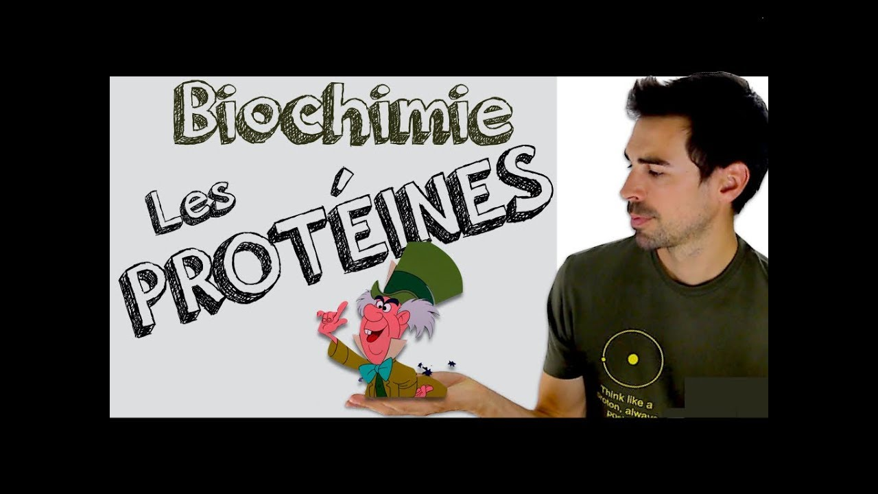 Cours de biochimie: Protéines, introduction - YouTube