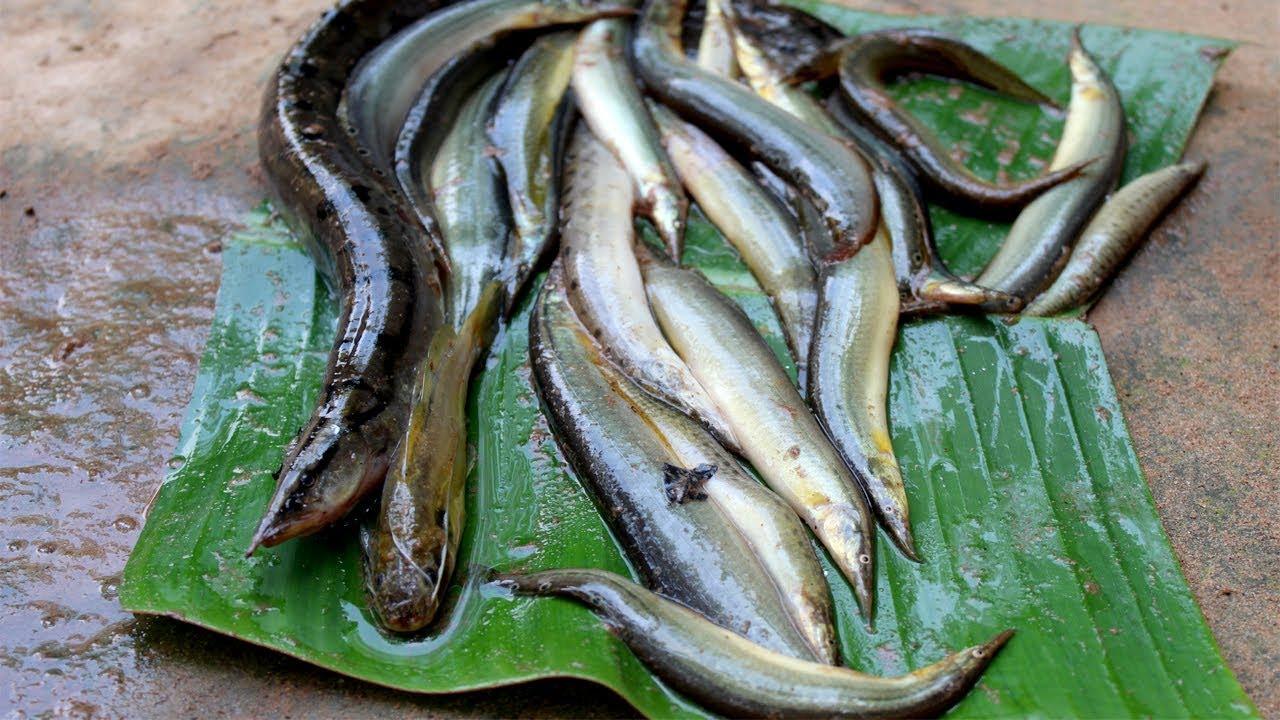 Kusia fish