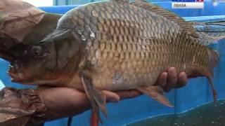 Клуб здорового питания - Прудовая рыба(Что у вас возникает в голове при мысли о прудовой рыбе? Запах тины? Куча мелких косточек? Поздравляю, вы,..., 2013-07-16T05:19:28.000Z)