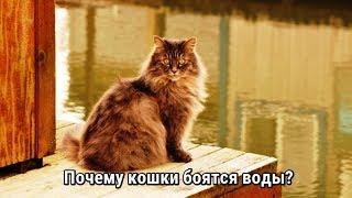Кошки и вода. Почему кошки боятся воды?