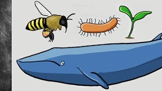Why do living things evolve? | The selfish gene explained