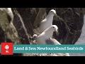 Land & Sea: Newfoundland Seabirds