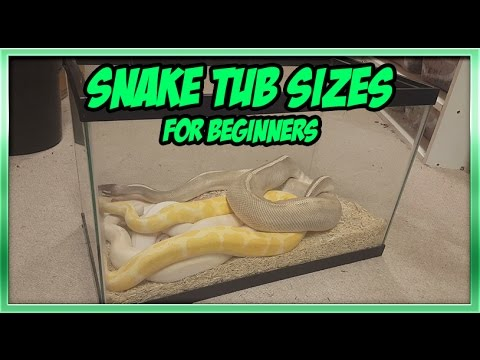 What Size Enclosure Should I Use For My Ball Python Youtube