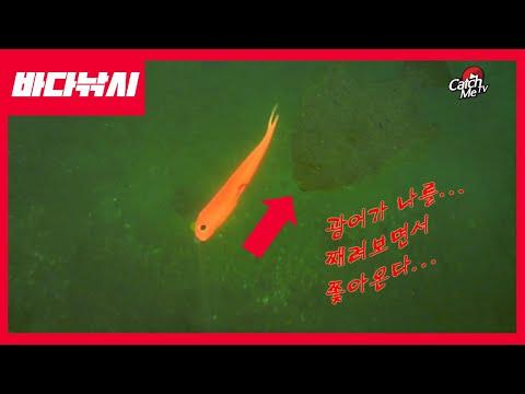 [4K 화질] 광어가 물 속에서 어떻게 따라올까�