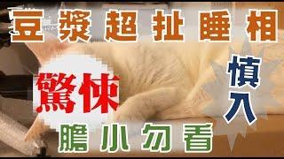 【豆漿 - SoybeanMilk】好誇張的睡相 這隻貓到底是誰!!!