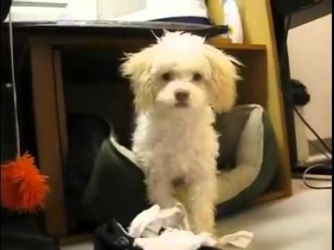 ce petit chien surpris en train de manger du papier. Black Bedroom Furniture Sets. Home Design Ideas