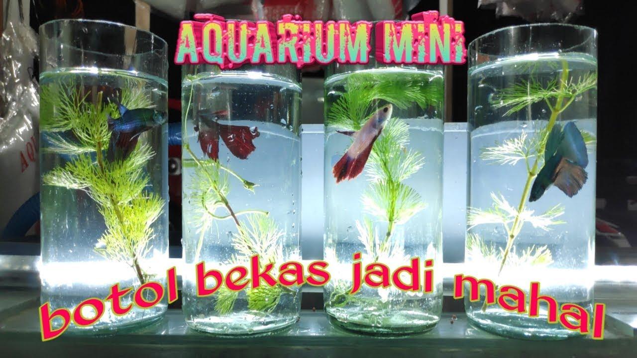 Aquarium Dari Botol Kaca Bekas Cupang Youtube