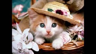 Детские стихи.Малиновая кошка. Наталья Колмагорова