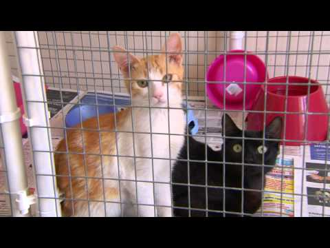 Gibraltar Vet Clinic appealing to public for adoptions
