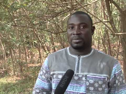 Sustaining the forest and its resources: The Growing Forest Partnerships approach in Ghana