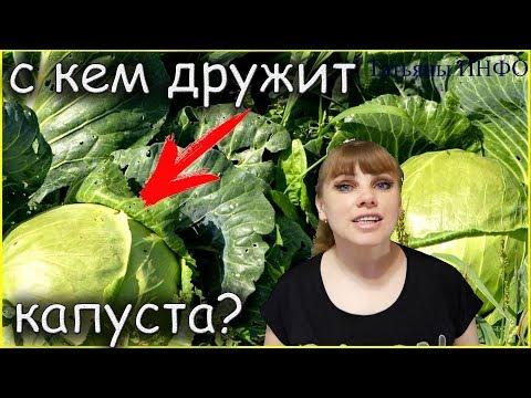 Вопрос: Какие овощные культуры хорошо сажать рядом какие нельзя?