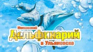 Дельфинарий в  Ульяновске 2017г (Волга-Спорт-Арена)