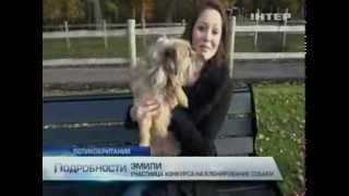 В Великобритании готовы клонировать первую собаку