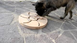 Cairn Terrier Holger - Dog Turbo By Nina Ottosson