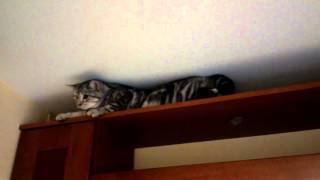 Кошка ползает по-пластунски
