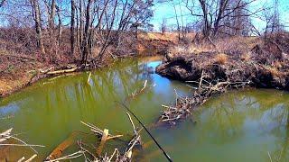 Микро речка дала желаемое до запрета Голавль и щука на микроджиг Приманка на весеннего голавля