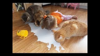 💗Aww - Funny and Cute Animals Compilation 2019💗 #10