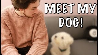 MEET MY DOG!