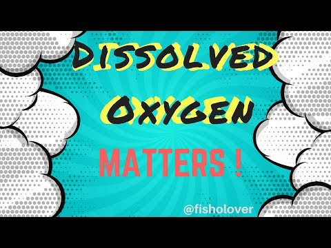 Dissolved Oxygen Matters: How Does It Affect Your Aquaculture Species