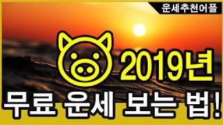 2019년 황금돼지 운세 무료로 보는방법
