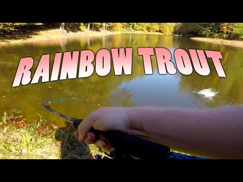 Fishing A Stocked Trout Pond