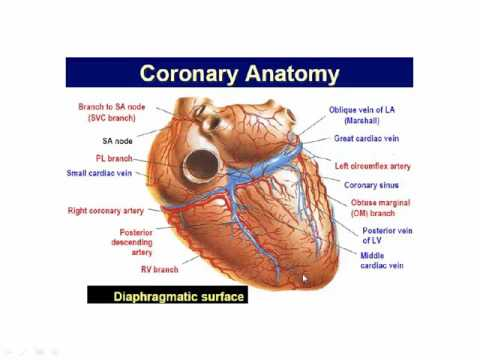 Basic Coronary Angiography  (part 1)