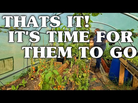 What Vegetables To Grow In Winter Uk, Planting In The Poly Tunnel