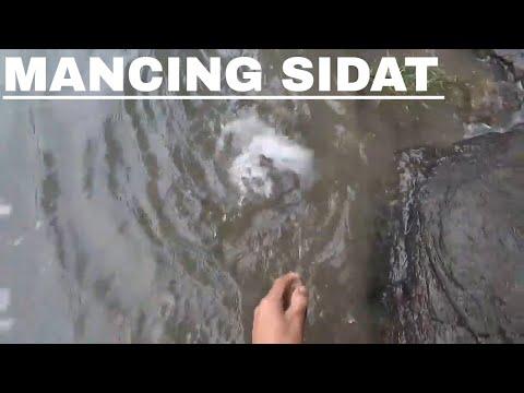 NAJUR SIDAT DI QUARI BATU PAKE UMPAN INI, DAPATNYA BANYAK | EEL FISHING
