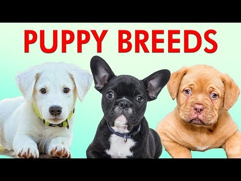 PUPPY BREEDS 101 - Learn Different Breeds of Puppies | Breeds of Dogs