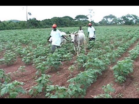 La Côte d'Ivoire classée au 1er rang des pays d'Afrique subsaharienne en matière d'agri-business