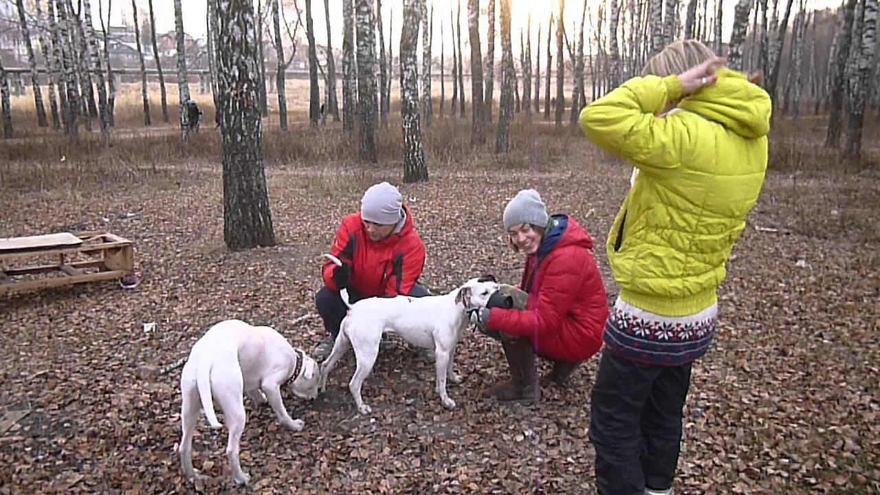 Как вязать собаку первый раз видео