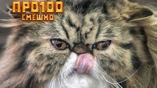 Самые смешные кошки 2