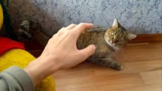 Скотч на спине кошки