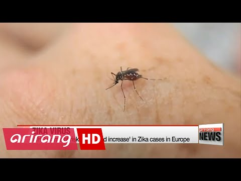 WHO warns of risk of 'marked increase' in Zika cases in Europe