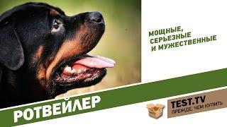 TEST.TV: Ротвейлер - собака опасная не в правильных руках.