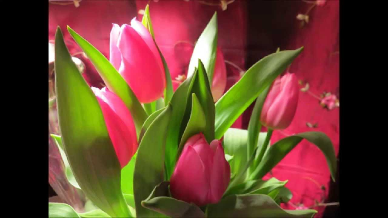 My Pretty Pink Tulip Flowers Youtube