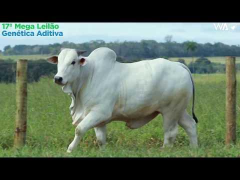 LOTE 102 - REM 10190 - 17º Mega Leilão Genética Aditiva 2020