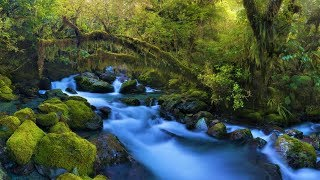 Beautiful Instrumental Hymns for Sleep and Relaxing | Peaceful, Soothing, Calming