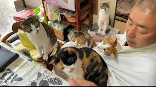 那須の長楽寺です。おっちょこちょいのおかみと優しい住職と猫盛りだくさんです。