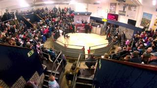 Fastest Auctioneer in the West.Global Classic Sale.UK Dairy Expo