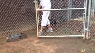 Sweet Rottweiler For Adoption